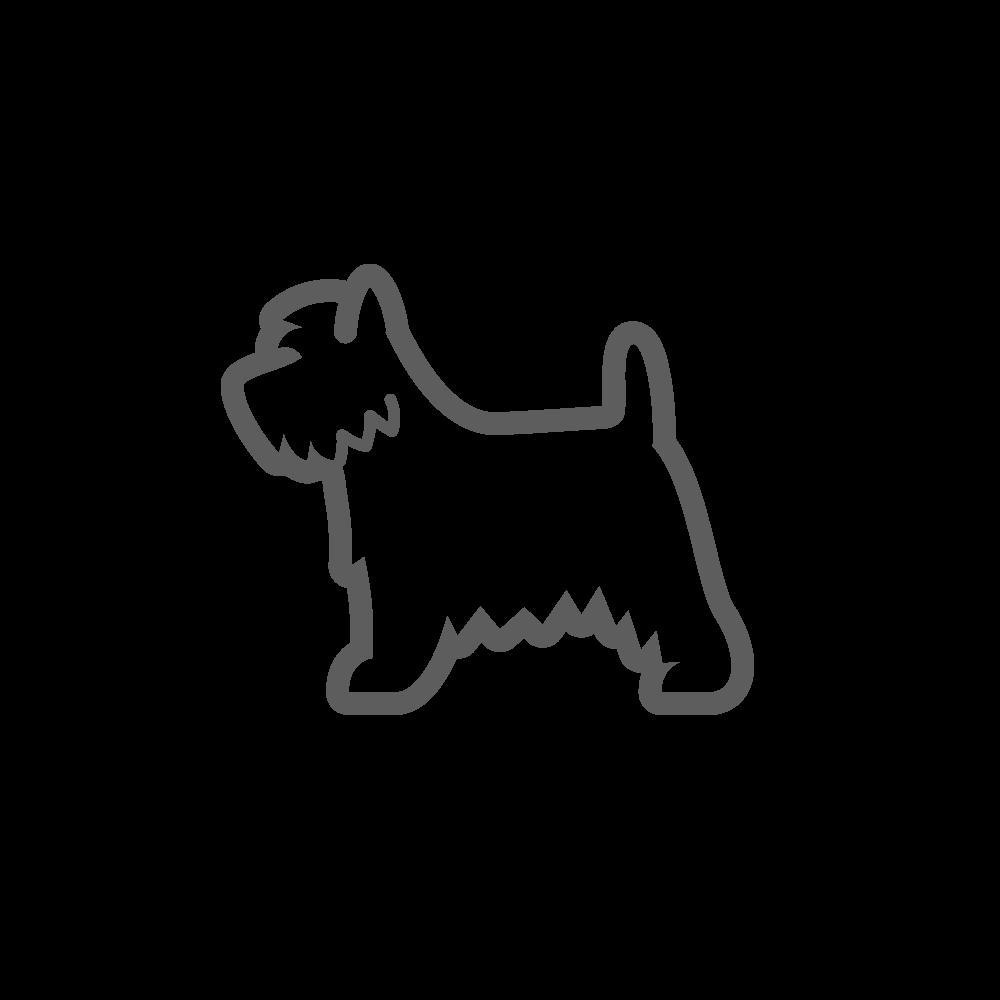 terrier-sm